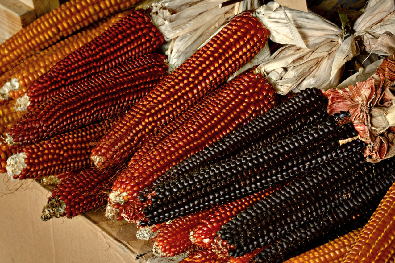 Autumn Colors Autumn Food Black Food Cereals Close-up Fall Fall Colors Food Photography Italian Food Maize Natural Food No People NoTTIP Orange Food Organic Food Produce Red Food Slowfood Summer Food Terramadre Yellow Food