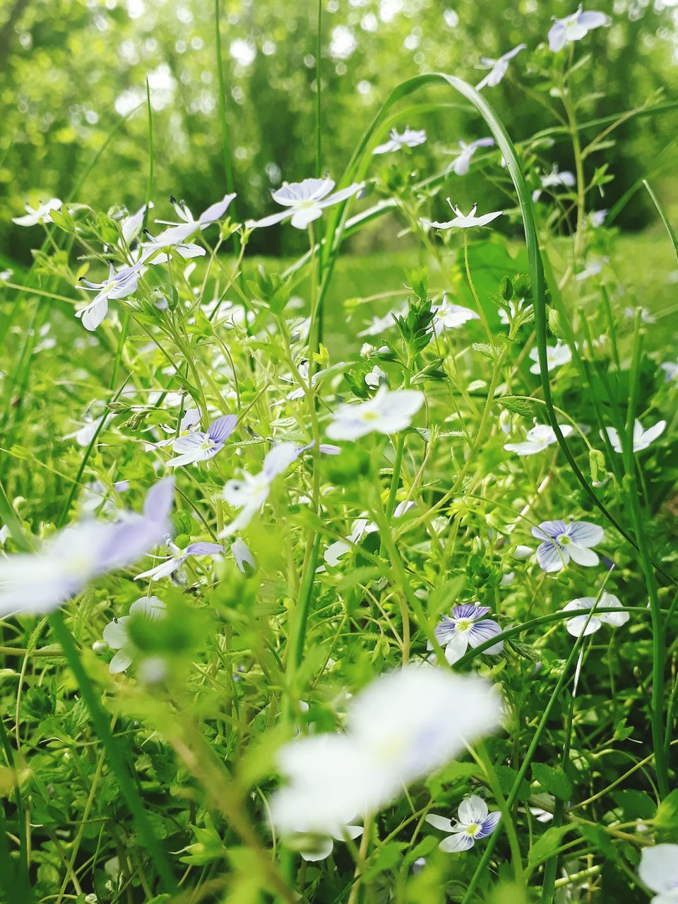 beautiful, growth, green, delicate, nature, grass, plant, outdoors, no people, day