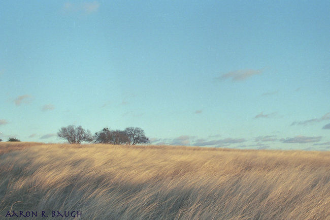 An early photo I took with my AE1. It was a very windy day, it turned out the way I saw it. Agriculture Beauty In Nature Blue Sky CanonAE-1 Cloud - Sky Dallas Texas Day Film Landscape Nature No People Nofilter Outdoors Scenics Sky SLR Camera Tranquil Scene Tranquility Tree Windy
