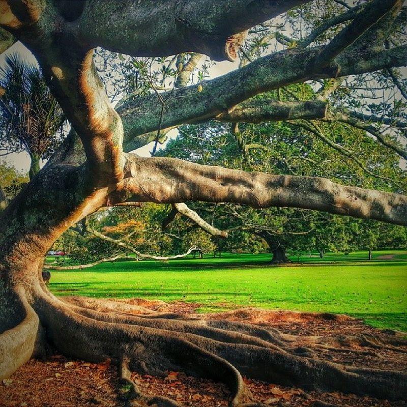 Tree Nature Android Cornwallpark newzealand