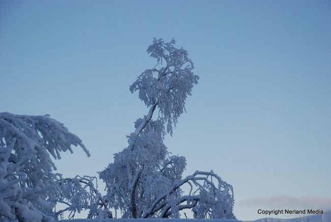 Snow :) Tree Bluesky Norway