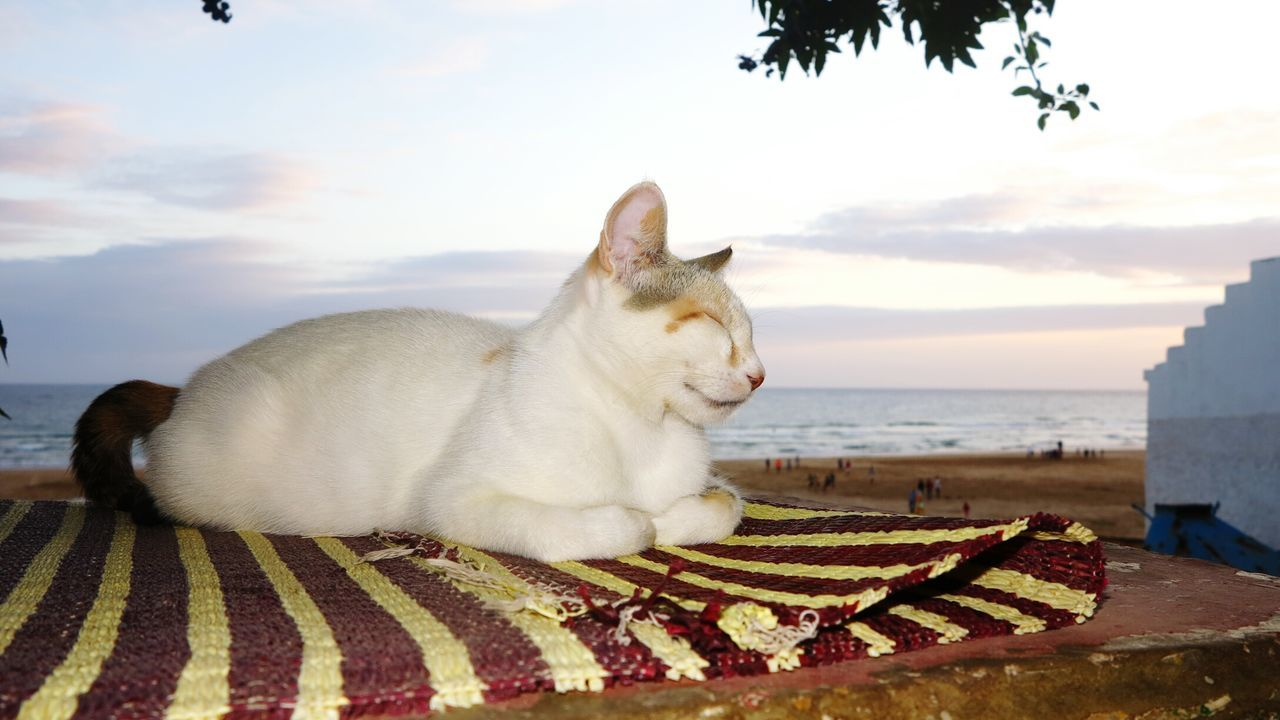 Cat Relaxing On Wall At Sunset