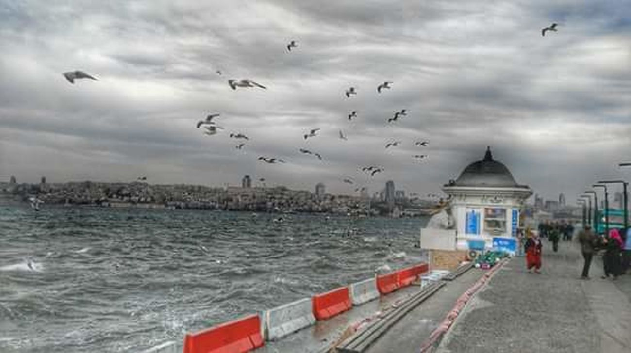 Sen bir Aşk'sın İstanbul.You aarea love İstanbul. Flying Cloud - Sky Sky Large Group Of Animals Flock Of Birds Beach Outdoors Animal Wildlife No People Animals In The Wild Animal Themes Nature Day Sea Bird Istabul Kızkulesi Tourism