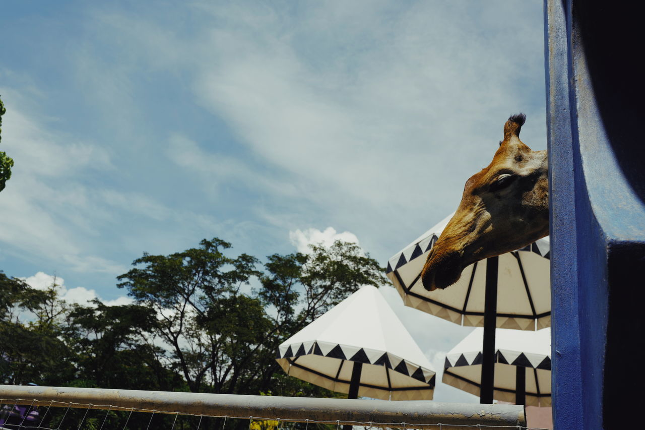Zoo time Animal Representation Sky Low Angle View Day Built Structure No People Architecture Sculpture Roof Outdoors Tree Building Exterior Carousel Giraffe Head Giraffe♥ Giraffe Zoo Animal Animal Wildlife