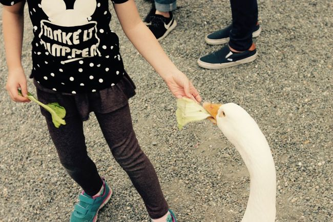原來鵝會吃菜 Casual Clothing Day EyeEm Taiwan Leisure Activity Lifestyles Nature Outdoors Part Of The Great Outdoors - 2016 EyeEm Awards Follow The Street Photographer - 2016 EyeEm Awards The View And The Spirit Of Taiwan 台灣景