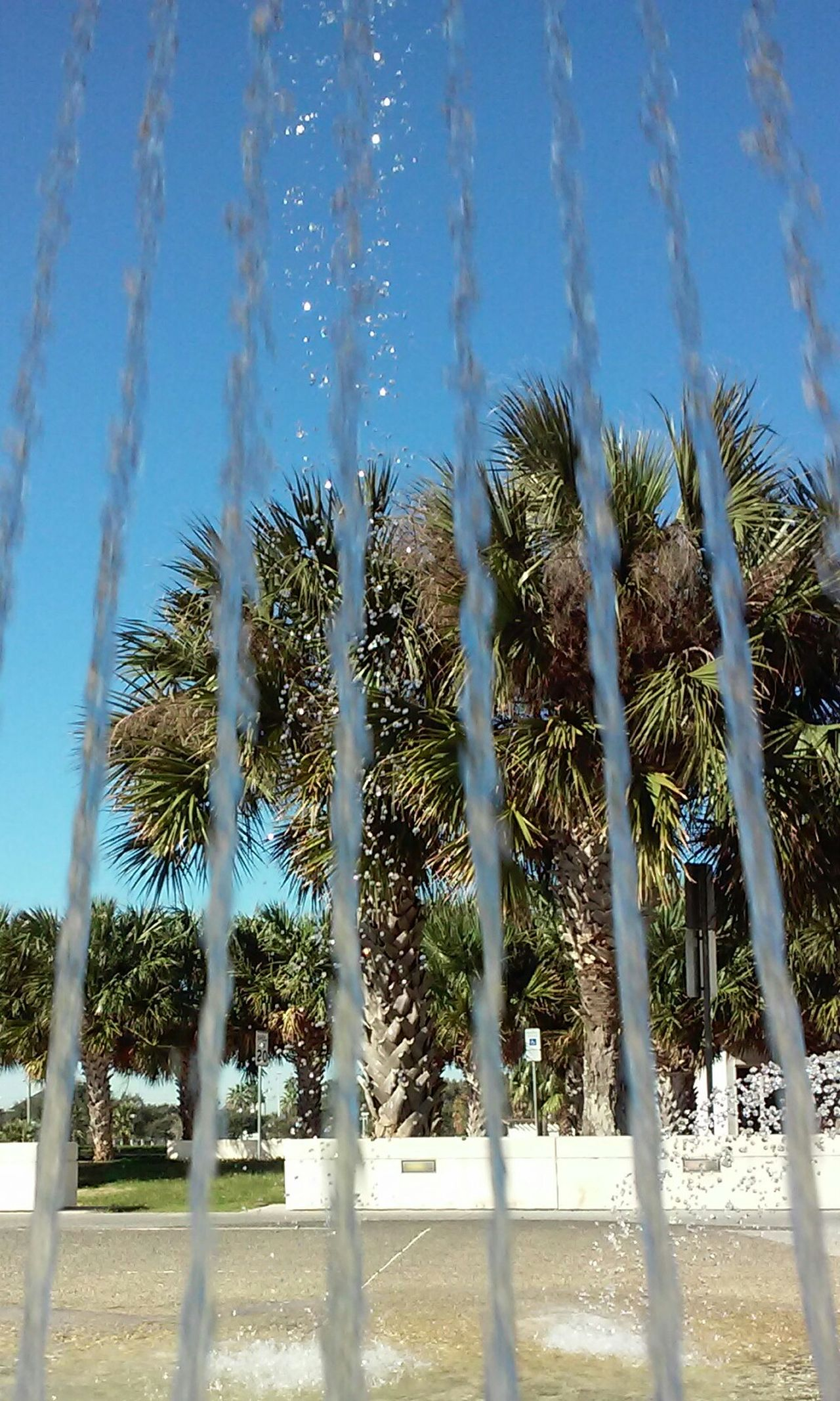 Cellphone Photography Water Streams Palm Trees Bayfront Taking Photos Enjoyin Life Keep Smiling Beautiful Day Beauty In Ordinary Things Finding Beauty In The Little Things have a sweet weekend!! 💕