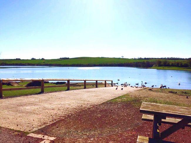 Beautiful Day Countryside Calm Water Clear Sky EyeEm Birds Ducks Sunny Day EyeEm Of The Week
