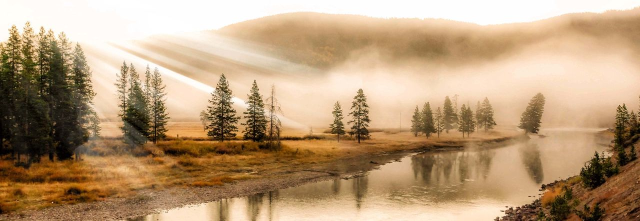 Misty morning on a Yellowstone river. Beauty In Nature Day Day Break Fog Forest Landscape Lightrays Morning Light Mountain National Park Nature No People Outdoors Pine Tree Plant Scenics Sky Sunbeams Sunlight Sunlight Tranquil Scene Tree Water Wyoming Yellowstone,
