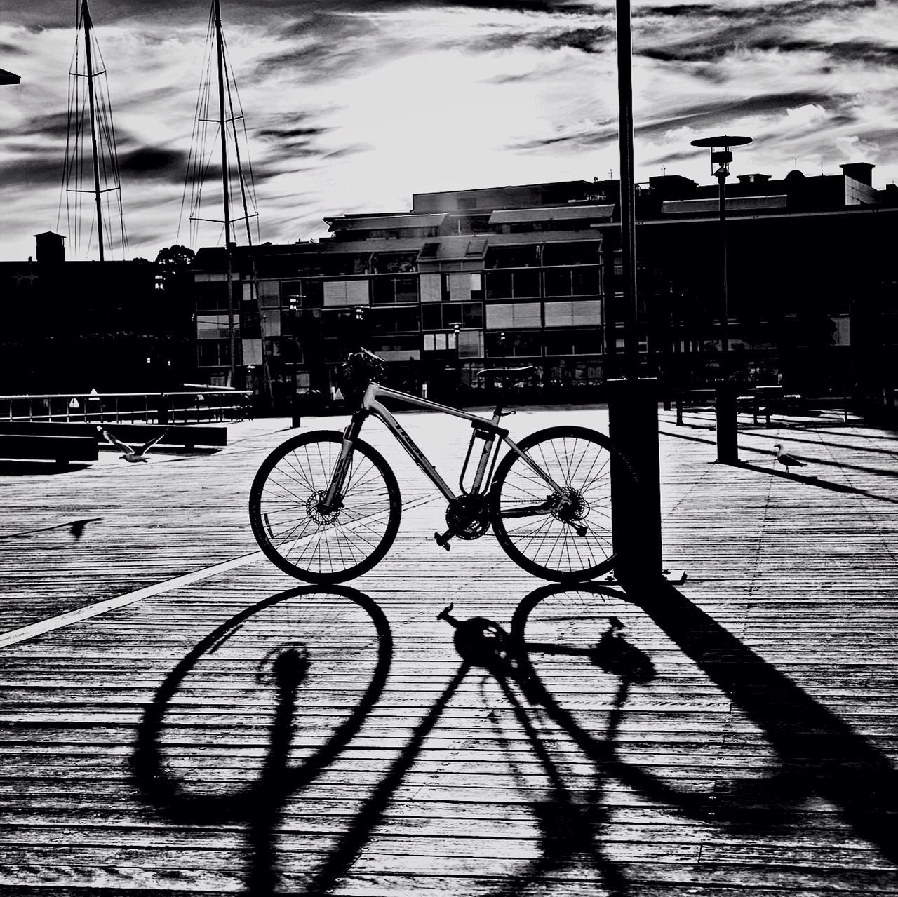 Sydney... Cycling haven! Bicycle Blackandwhite Sydney Shadow