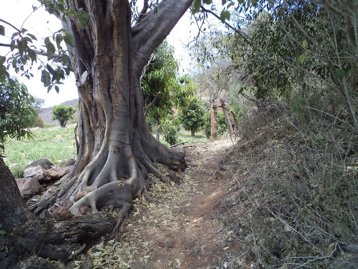 Tree Nature Day No People Outdoors Sky Villa Corona Pueblomagico Green Color Tranquility Villa Corona
