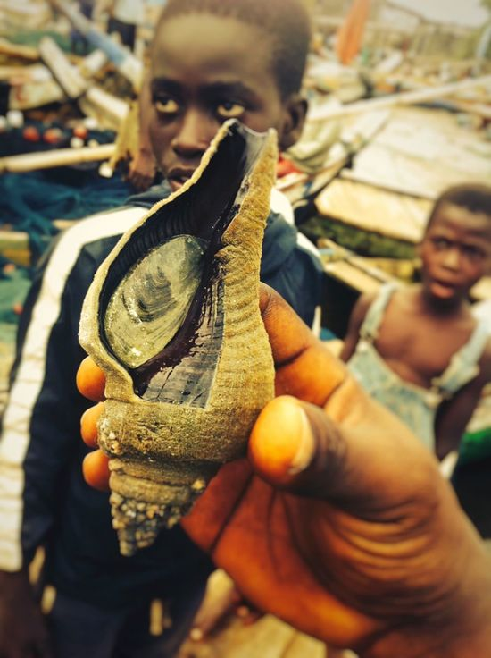 Holding Slug and surprised kids Kids Slug Snail Holding Shell Beach Side Human Hand Holding One Person Real People Human Body Part Close-up Currency Market Animal Themes Day People Outdoors