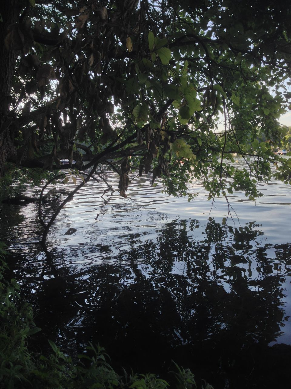 tree, nature, water, growth, outdoors, tranquility, no people, river, day, tranquil scene, beauty in nature, scenics, landscape, forest, branch