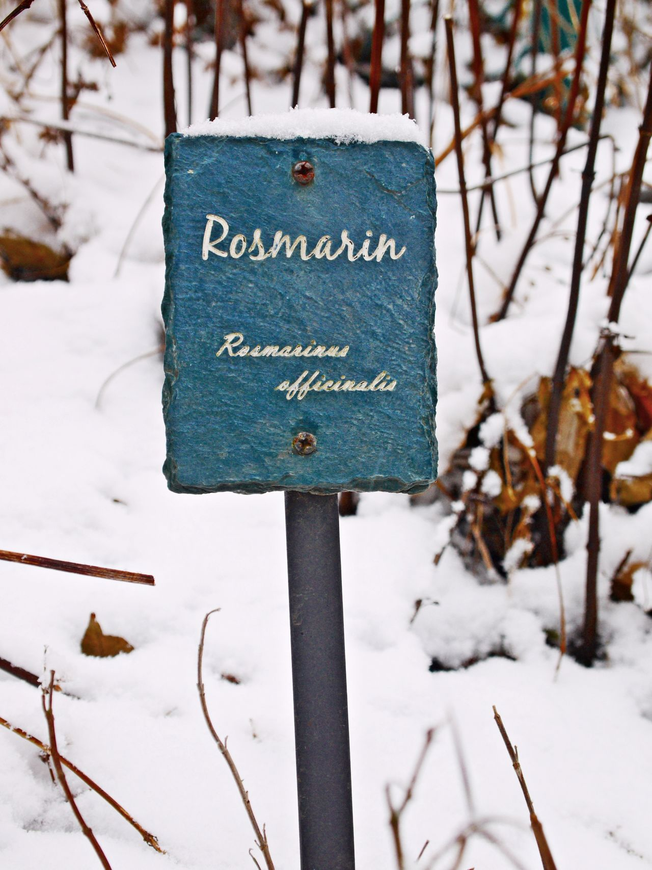 Close-up Cold Temperature Day Focus On Foreground Herbal Garden Nature No People Outdoors Rosmarin Signboard Snow Text Weather White Color Winter
