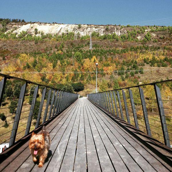 De vuelta Devuelta Día Soleado Mi Perro Tomy Bridge Navarra Dog Walking Nature Photography Happy :) Excercising