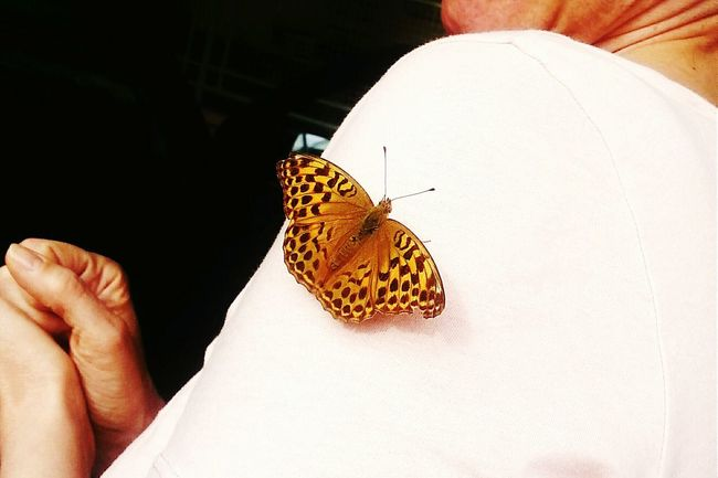 Butterfly Justthemoment Summer Views Nice Day Countryside Feel Like A Flower! Deceptively Simple