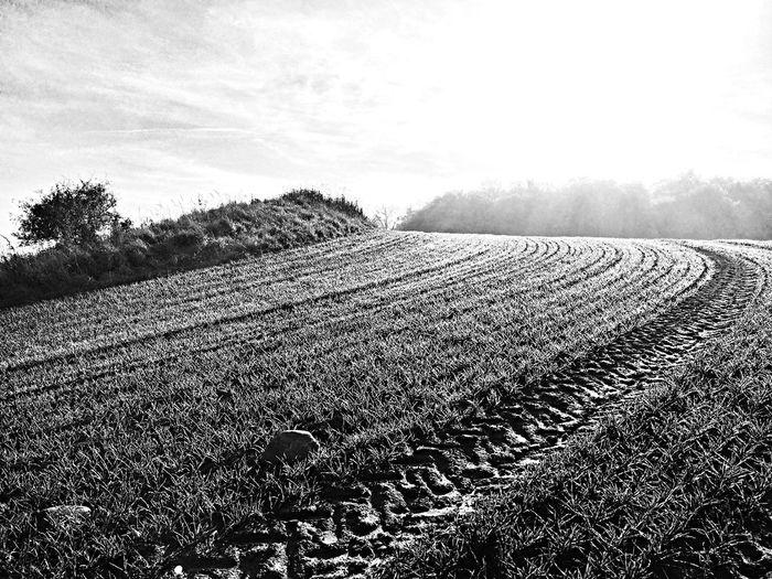 Light And Shadow Blackandwhite Monochrome Landscape