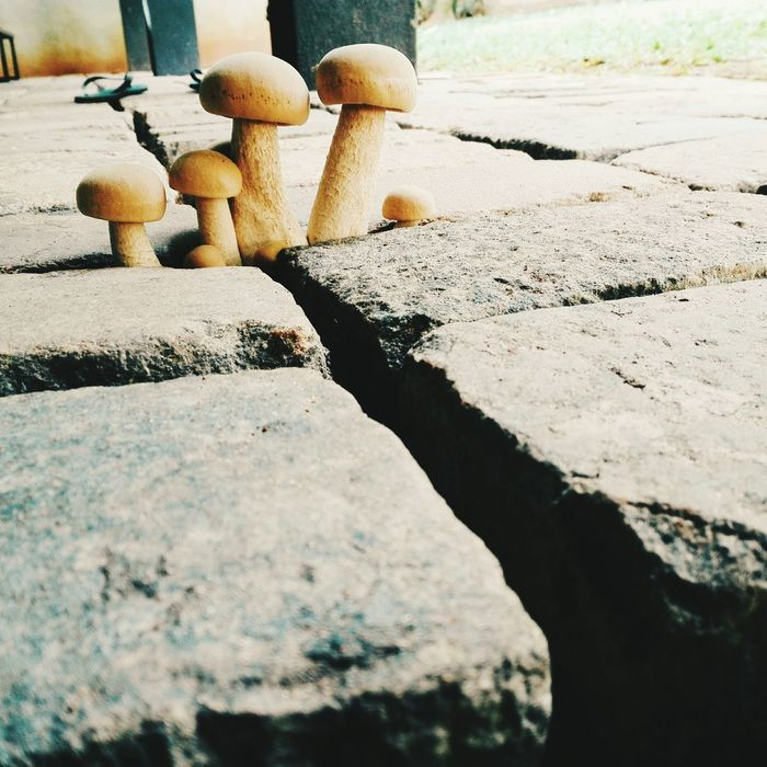 Like a family Day No People Pebble Outdoors Sunlight Shadow Nature Close-up Love This Moment Mushrooms So Cute ❤ Nature Scenery The Great Outdoors - 2017 EyeEm Awards Phone Photography Teenage Life Small Mushrooms Two Of A Kind Love This  Weird Af Lol  Mushroom From The Backyard Rock Man Made Floor Adventure Outdoor Photography EyeEmNewHere The Great Outdoors - 2017 EyeEm Awards