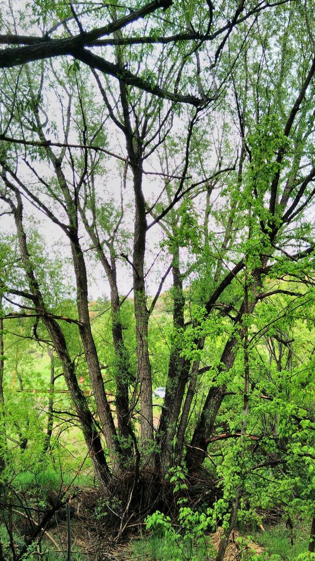 Greenery tree Landscape Spring In The Mountains Green Nature Sky And Trees