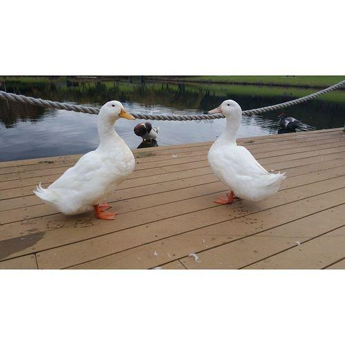 H A P P Y . T H U R S D A Y . 🐥❄💧 Ducksfordays