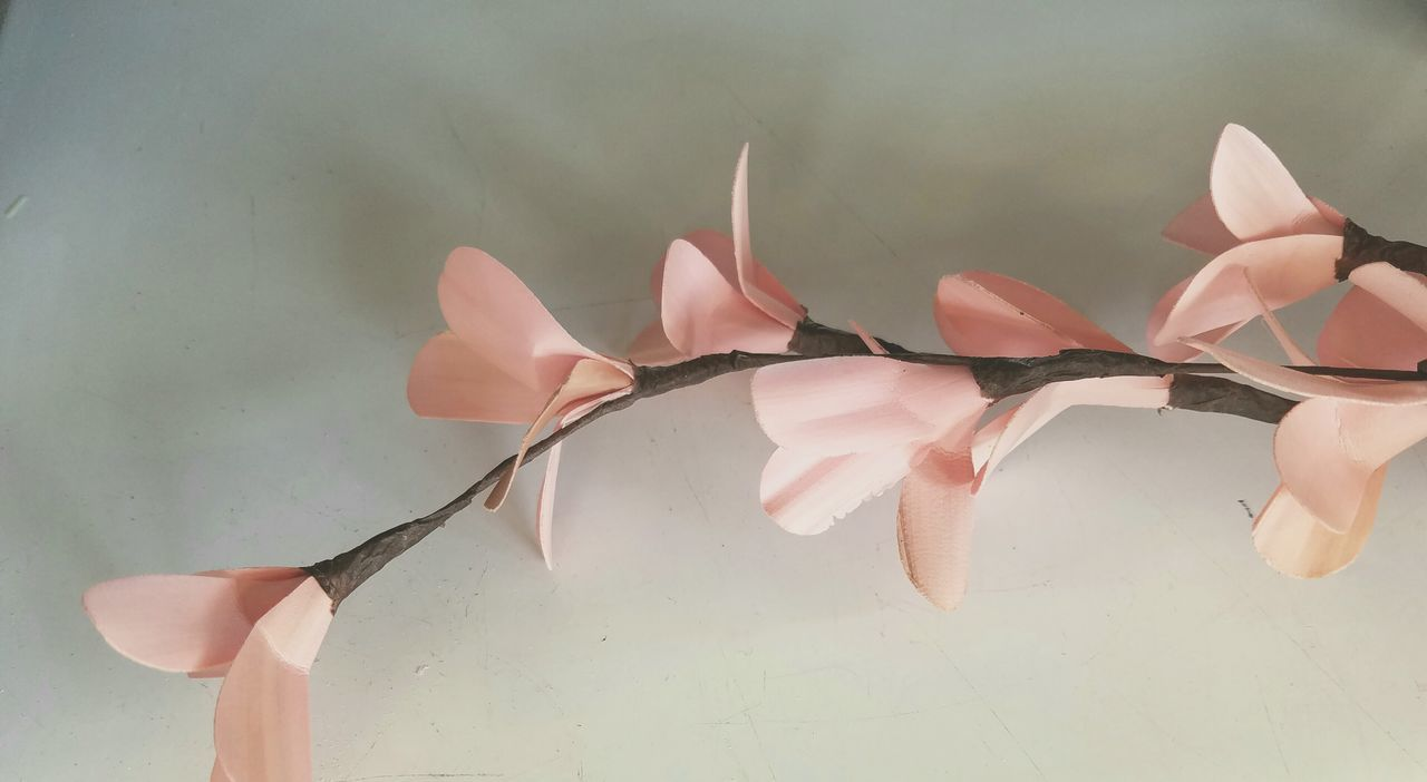 Millennial Pink Flower Fragility Minimalism Floral Simple Reflection Nature_perfection Meditation Eye Em Nature Lover Simplicity Check This Out Still Life Photography Fine Art Photgraphy Silhouette_collection Eyem Gallery Copy Space Shadows Light And Shadow Abstract Photography Beauty In Nature