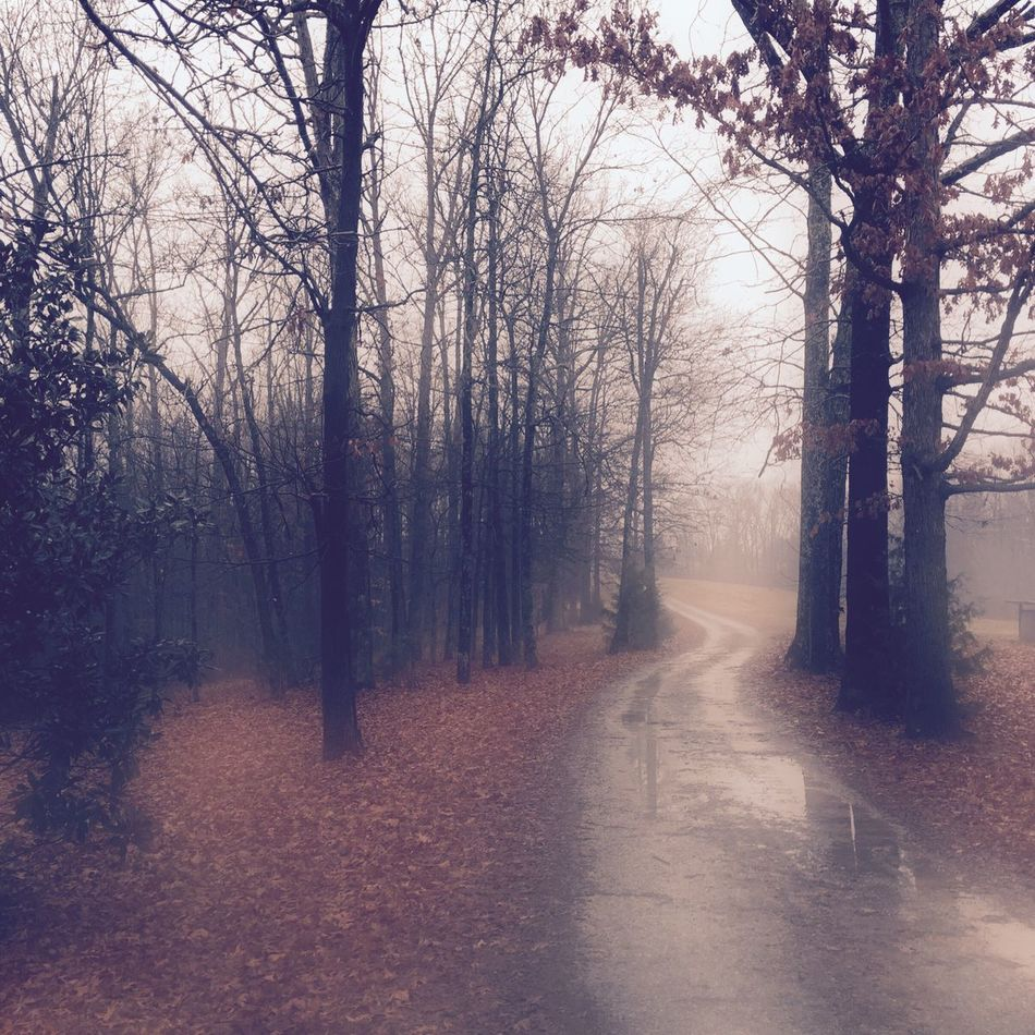 Tree Bare Tree Rain Fog Nature The Way Forward Beauty In Nature Cold Temperature Winter Tranquility Road Outdoors Tranquil Scene Day Branch Scenics Forest Landscape Sky No People Traveling Home For The Holidays EyeEm Best Shots EyeEm Nature Lover Finding New Frontiers