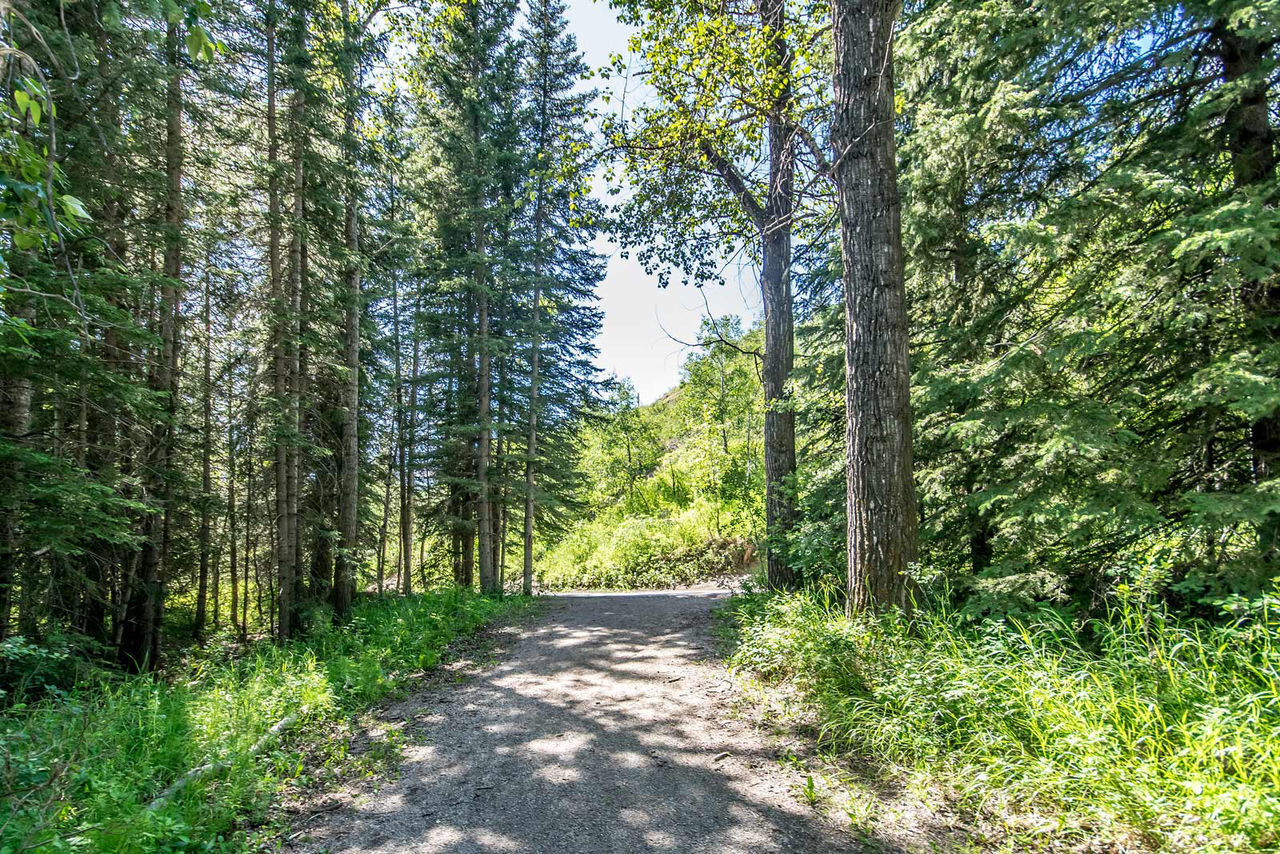tree, forest, nature, woodland, day, tranquil scene, scenics, no people, tree trunk, beauty in nature, pine tree, outdoors, road, green color, growth, tranquility, landscape, the way forward