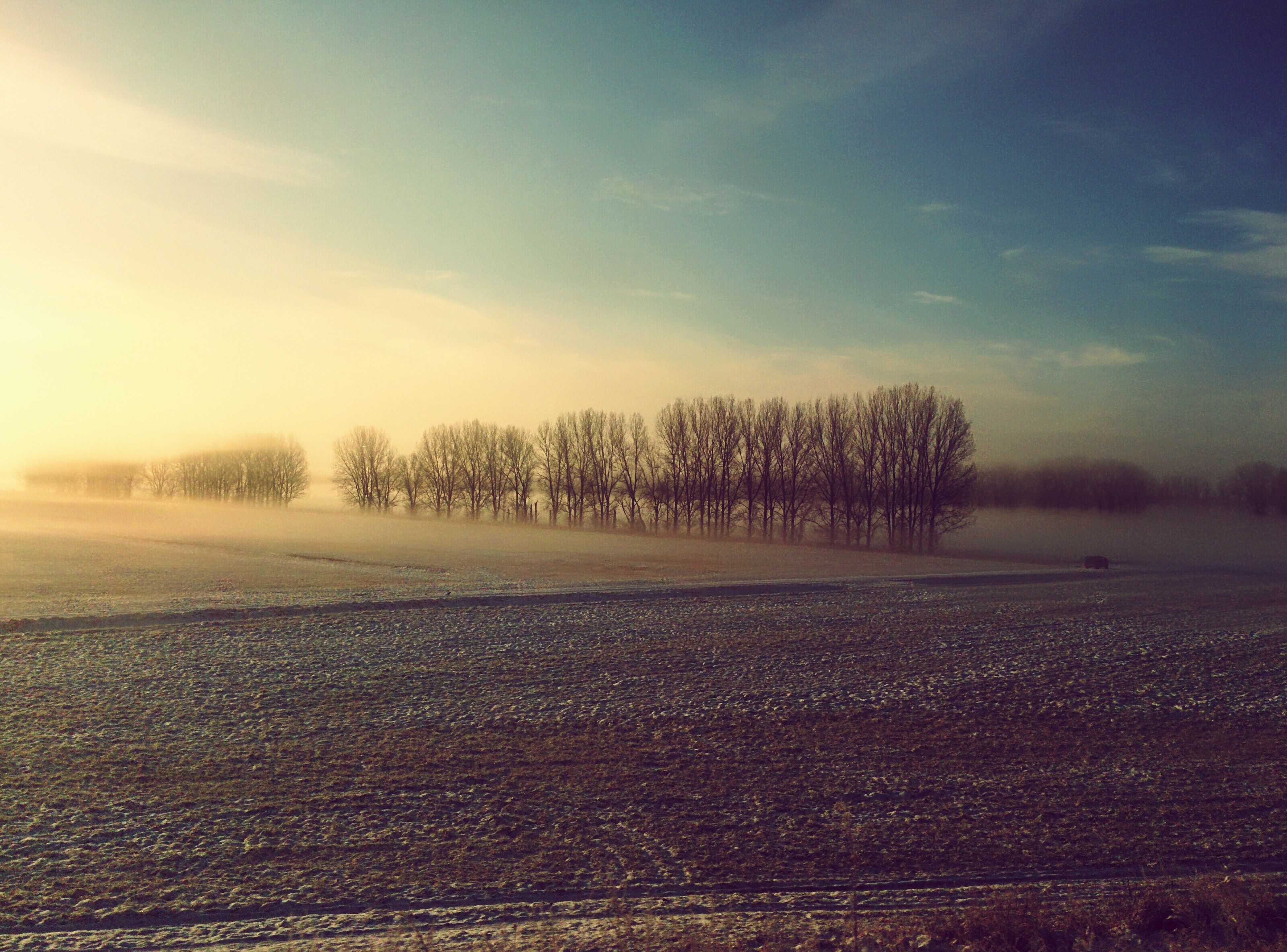 winter, snow, cold temperature, tree, tranquil scene, landscape, tranquility, weather, sky, scenics, nature, season, beauty in nature, field, bare tree, sunset, covering, non-urban scene, cloud - sky, dusk
