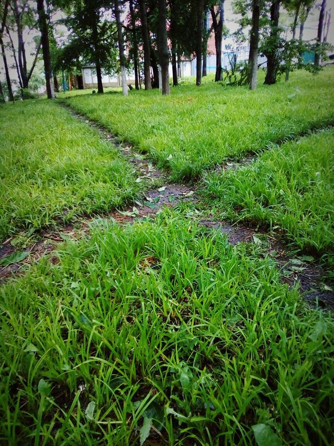 Your chose Cross Crossroads Pathways Grass Trees Green Morning Chose Chosen Paths Path Paths Angles Angles And Lines