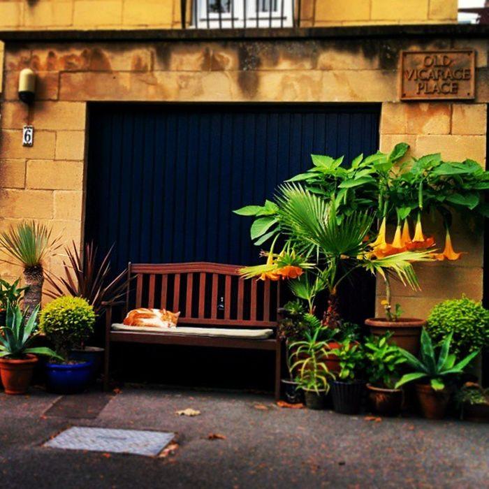 Bristol City England Clifton garage door gate cat kitty sleeps on the bench next to a beautiful flower stylish