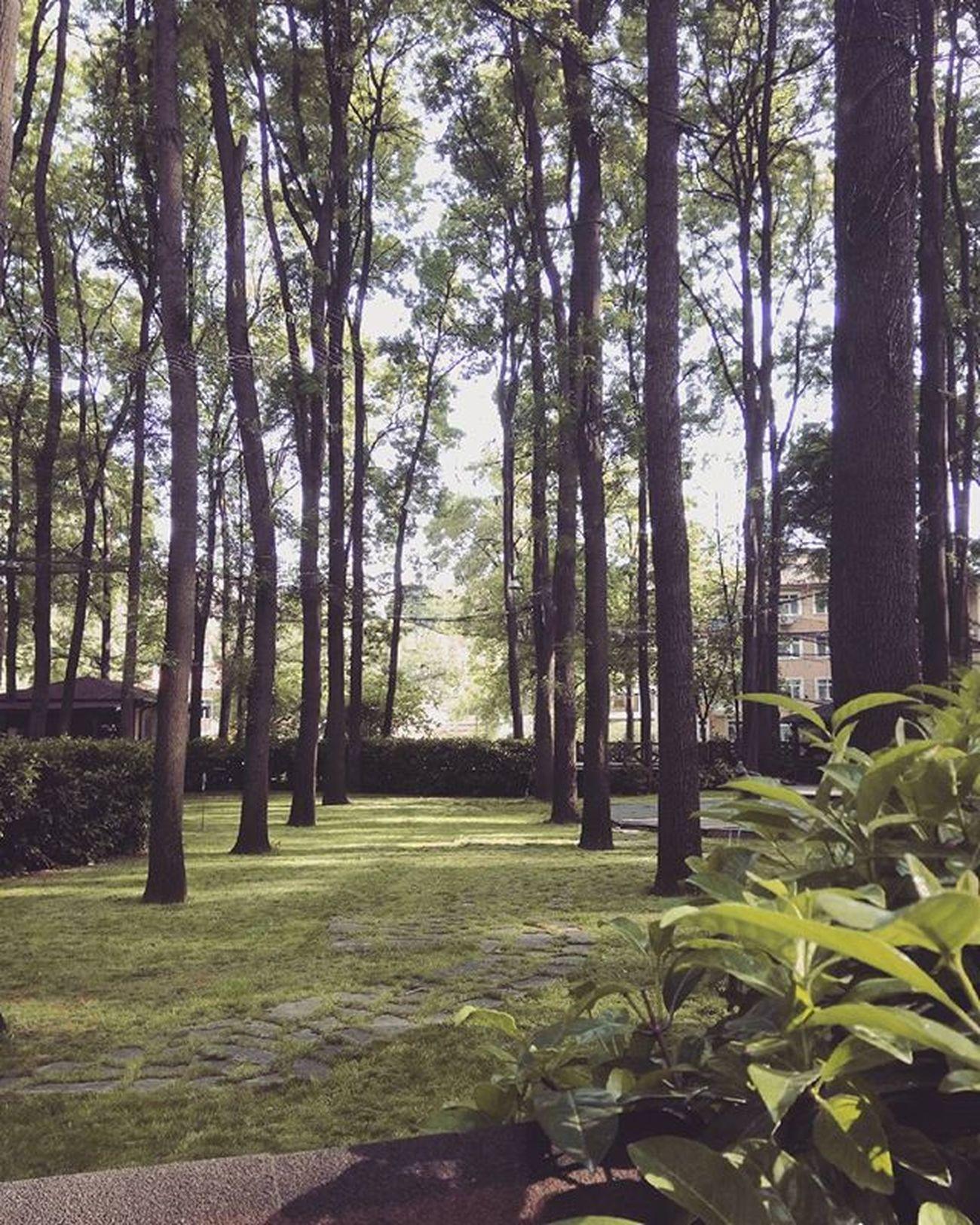 Ah yeşil, ağaç, doğa nasıl güzelsin nasıl 😍 Naturelovers Nature Naturephoto Doğa Doğafotoğrafçılığı Doğayı SEV Ormanpark Ormanısev Yeşilikoru Photograph Photooftheday Photographer Instagram Turkistagram Vsturkey Vsphoto Vscocam 23042016 Vscom Fotoğrafım