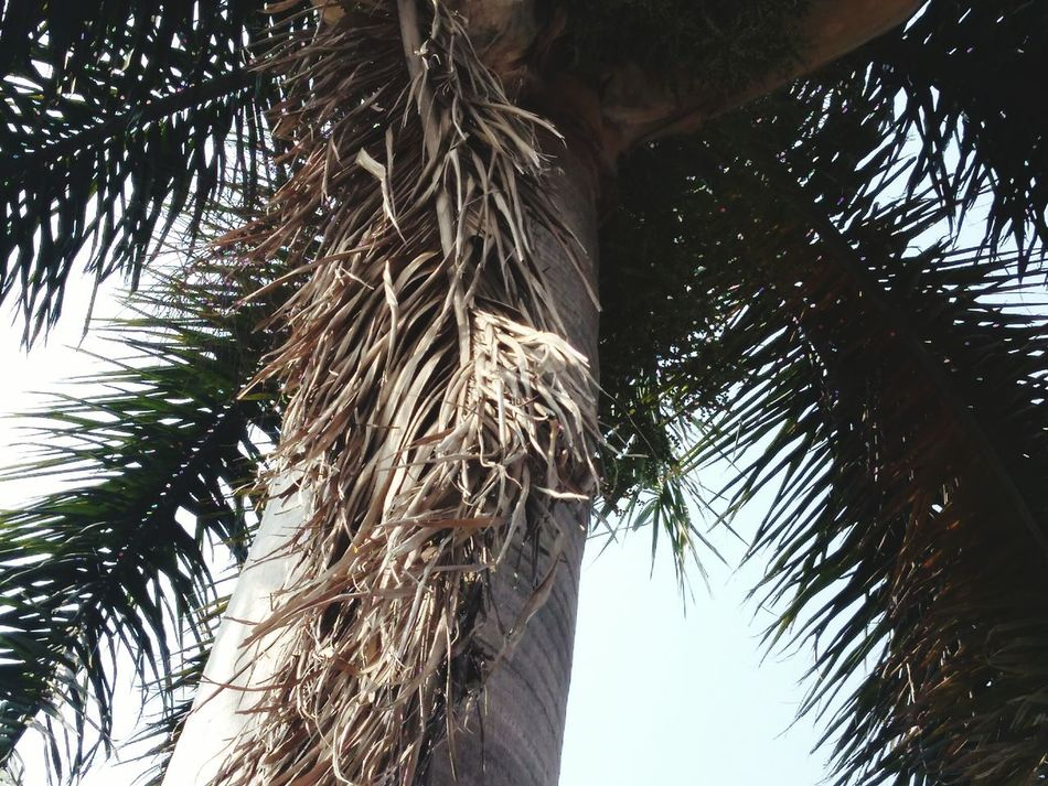 Under the tree ! Sky Nature Low Angle View Close-up Outdoors Palm Tree Tree Day PhonePhotography Phoneshot Indianphotographer Fullzoom Freshness Palm Tree Cloudy