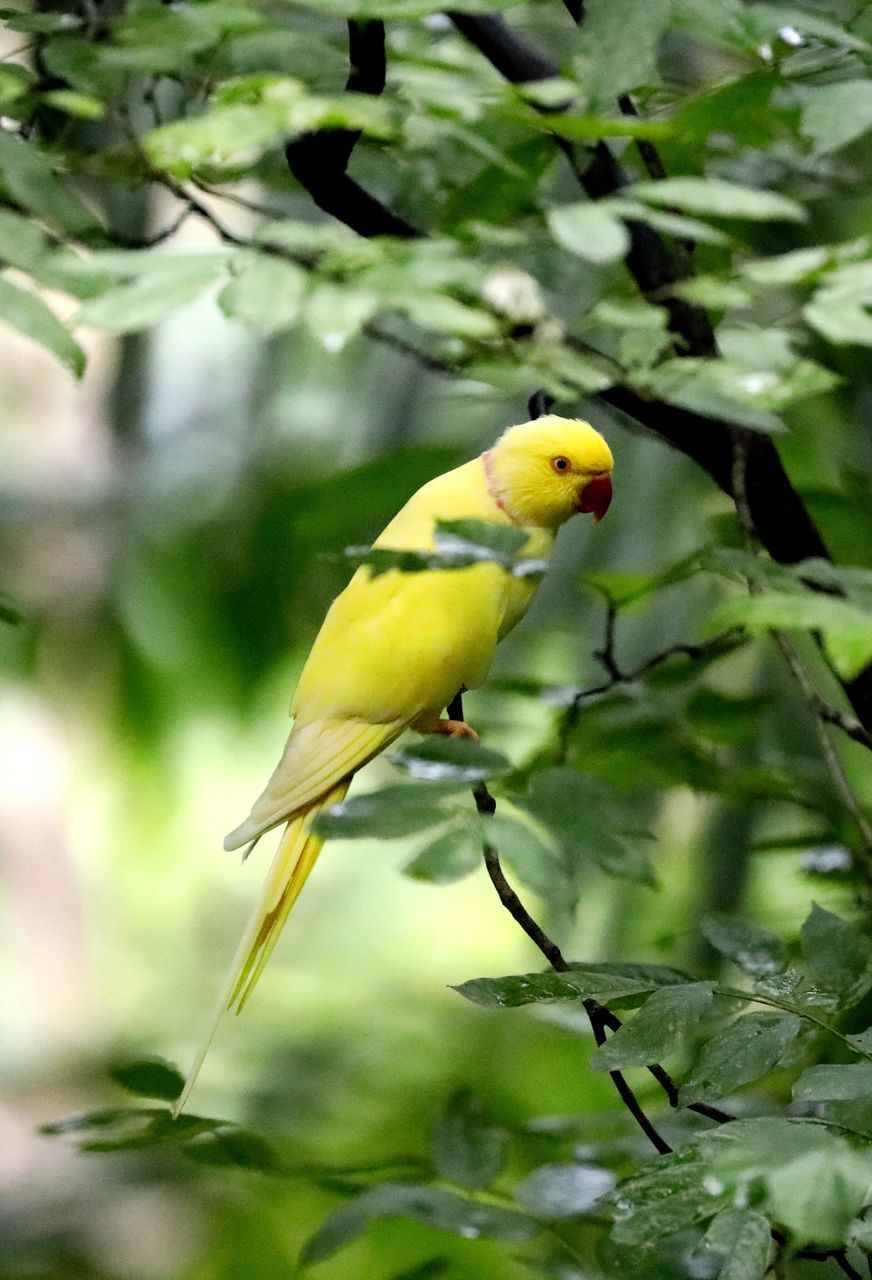 one animal, bird, animal themes, animals in the wild, focus on foreground, yellow, animal wildlife, no people, green color, day, perching, nature, outdoors, beauty in nature, close-up, tree