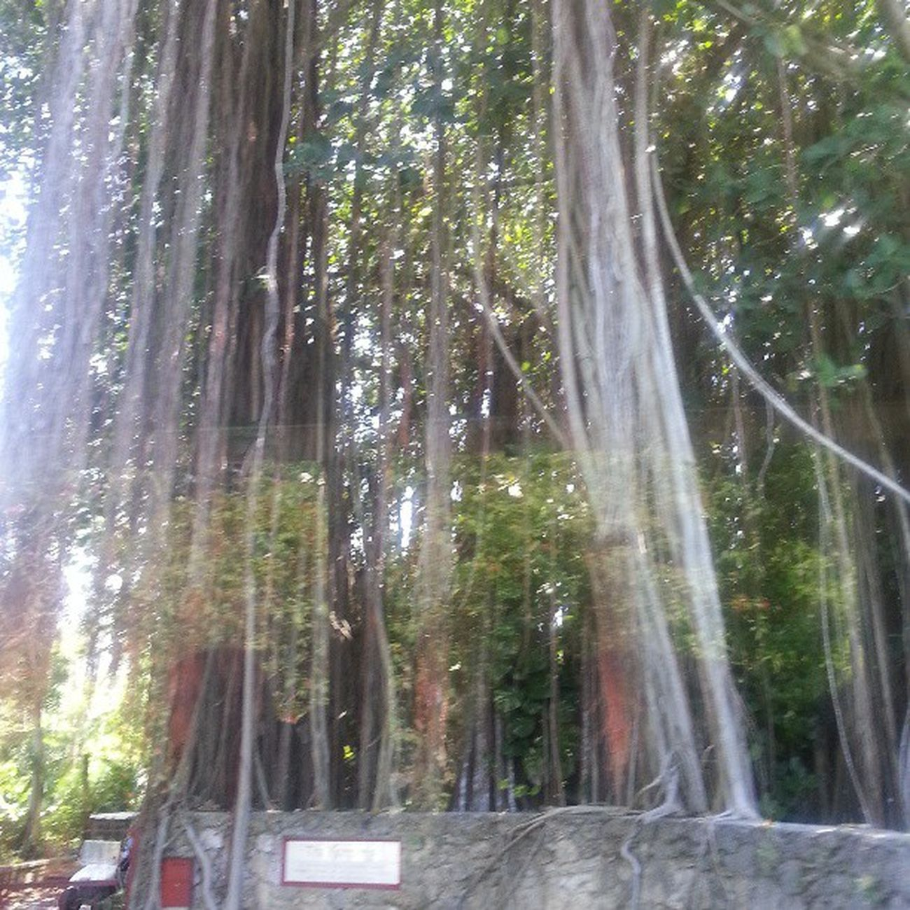 TheKampong CoconutGrove