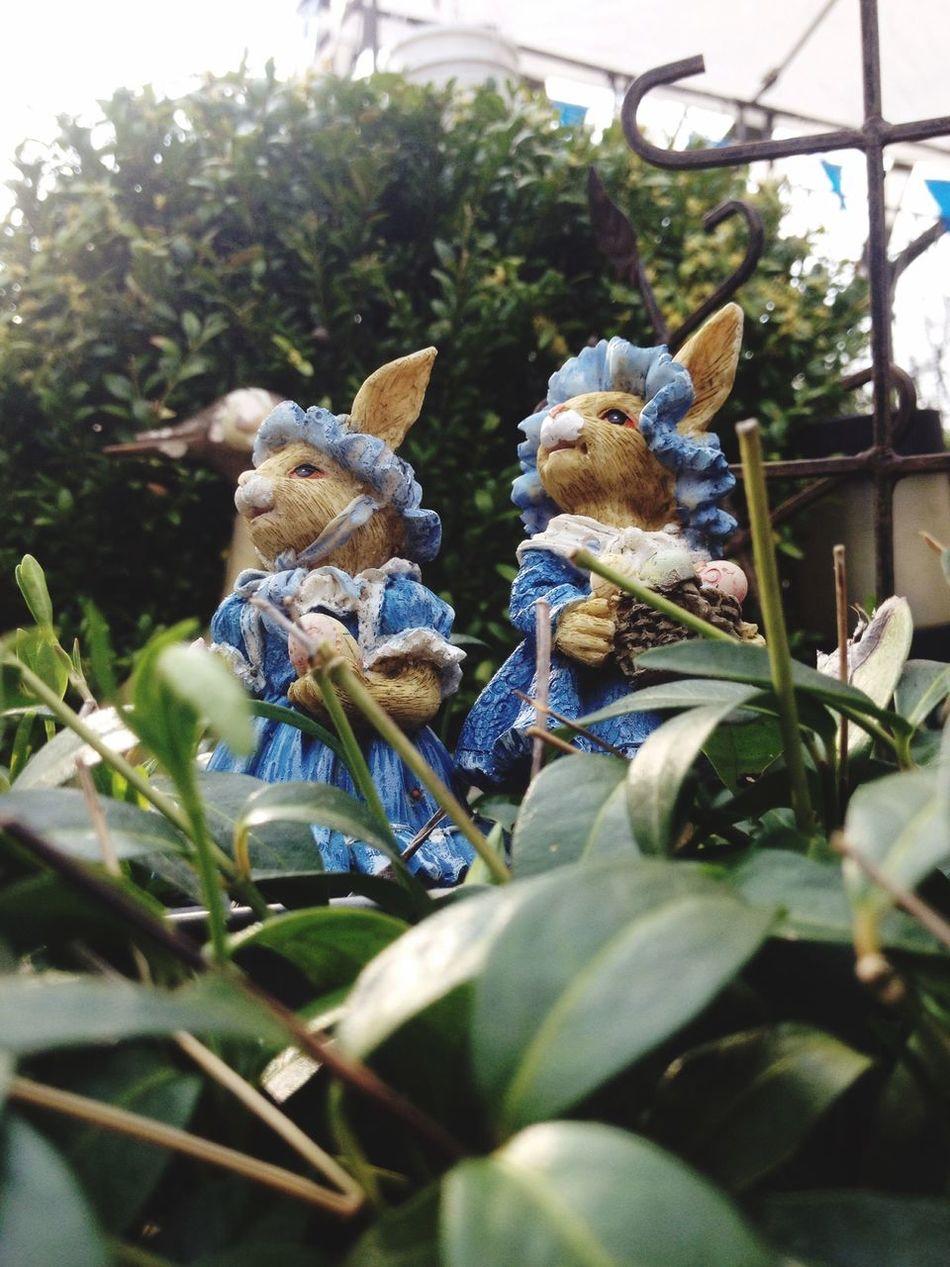 Ostern kann kommen Easter Eier Malen Garten Versteck Busch Hase Ostern