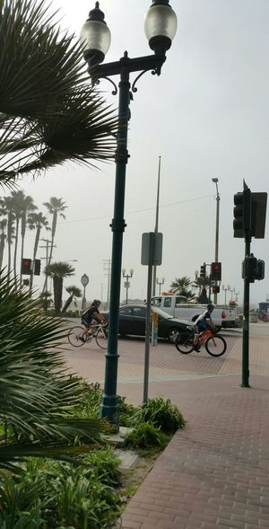 Bicycles Bike Riders Street Photography Pier Foggy Day Exercise Enjoying Biking Palm Nature_collection People Watching Street Crossing Having Fun People foggy day Seal Beach, California Showcase: February Surf's Up Seal Beach California