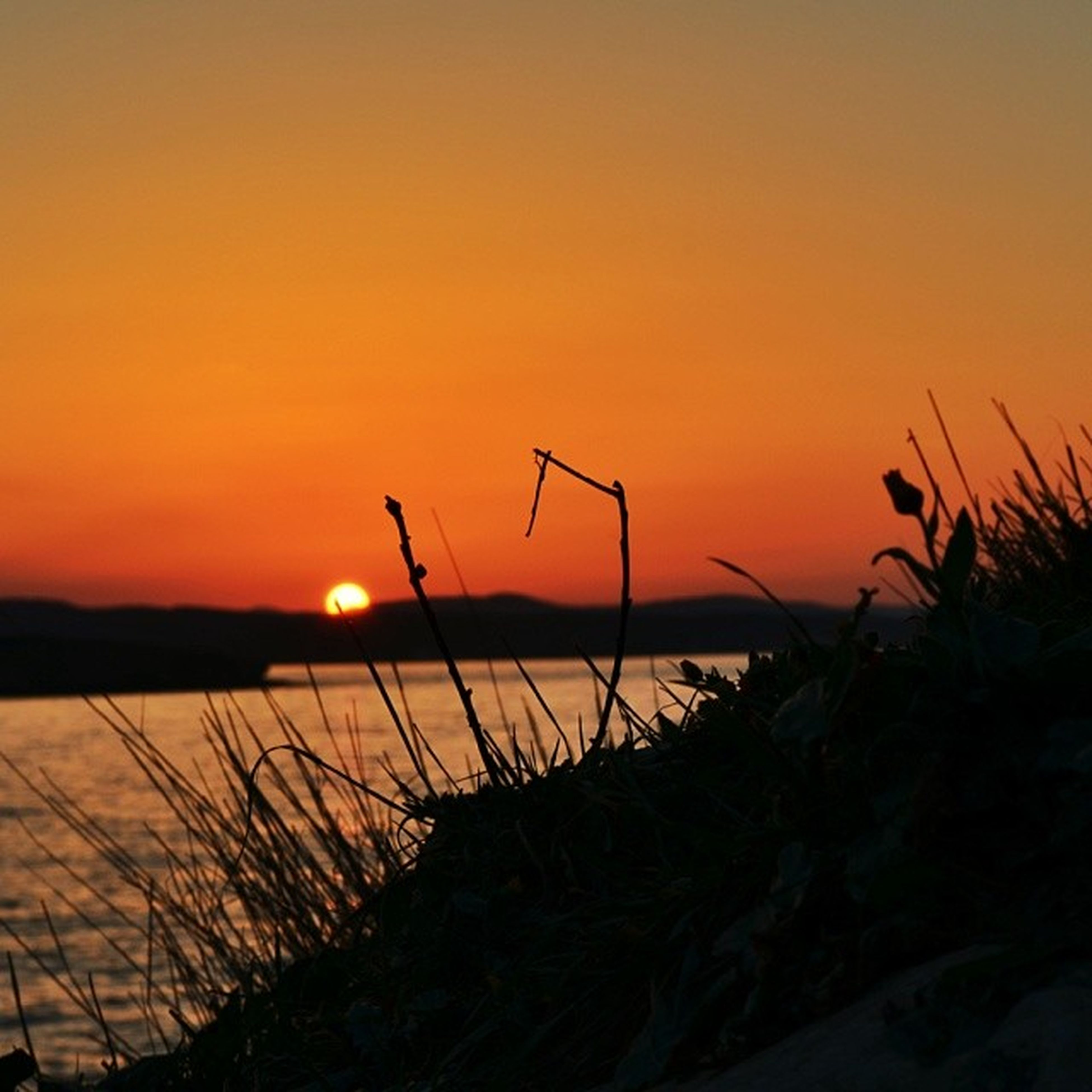 sunset, water, orange color, sun, silhouette, tranquility, tranquil scene, scenics, beauty in nature, sea, nature, clear sky, idyllic, plant, reflection, copy space, horizon over water, beach, sky, lake