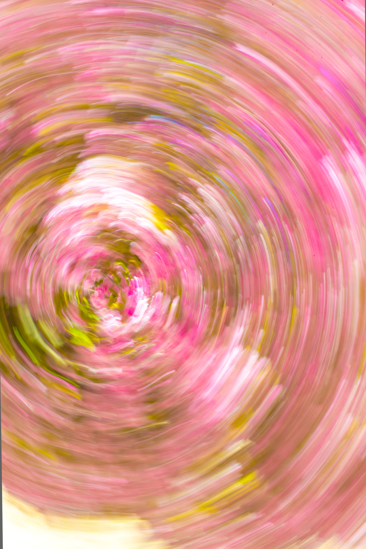 colors in move Blurred Motion Colour Colour Palette Colours Of Nature Concentric Motion Moving Colors Multi Colored Nature No People Pink Color Psychedelic Turning Around