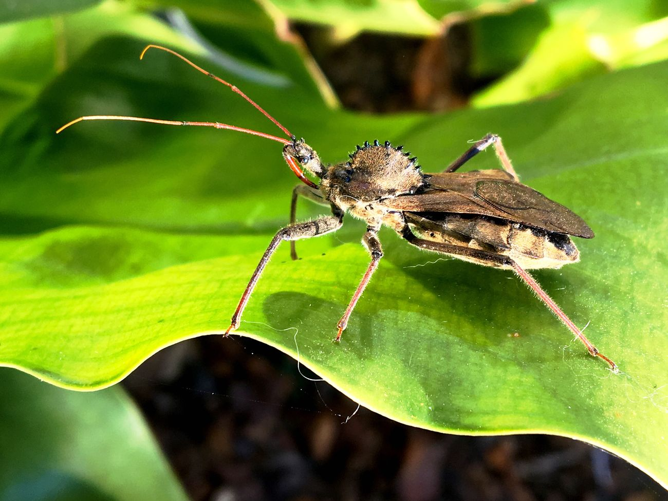 Animal Themes Stinkbug Insect Nature Beauty In Nature Outdoors Close-up Plant Leaf No People