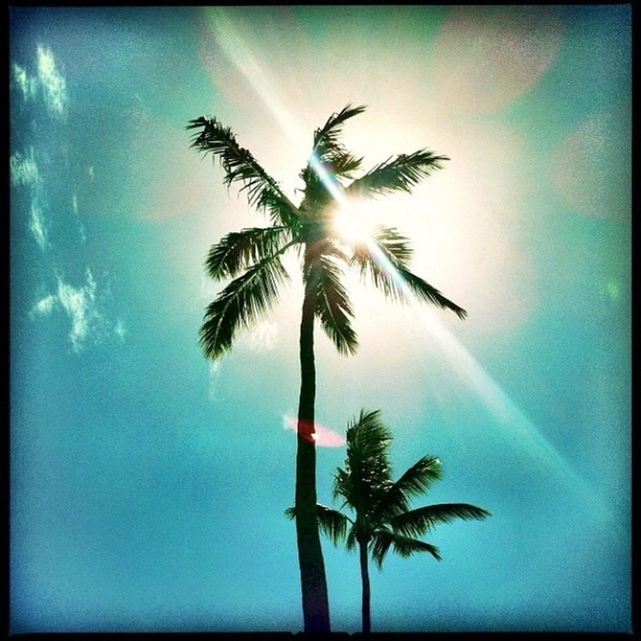 palm tree, low angle view, sky, tree, tree trunk, nature, no people, outdoors, growth, beauty in nature, palm frond, day, blue, scenics, close-up