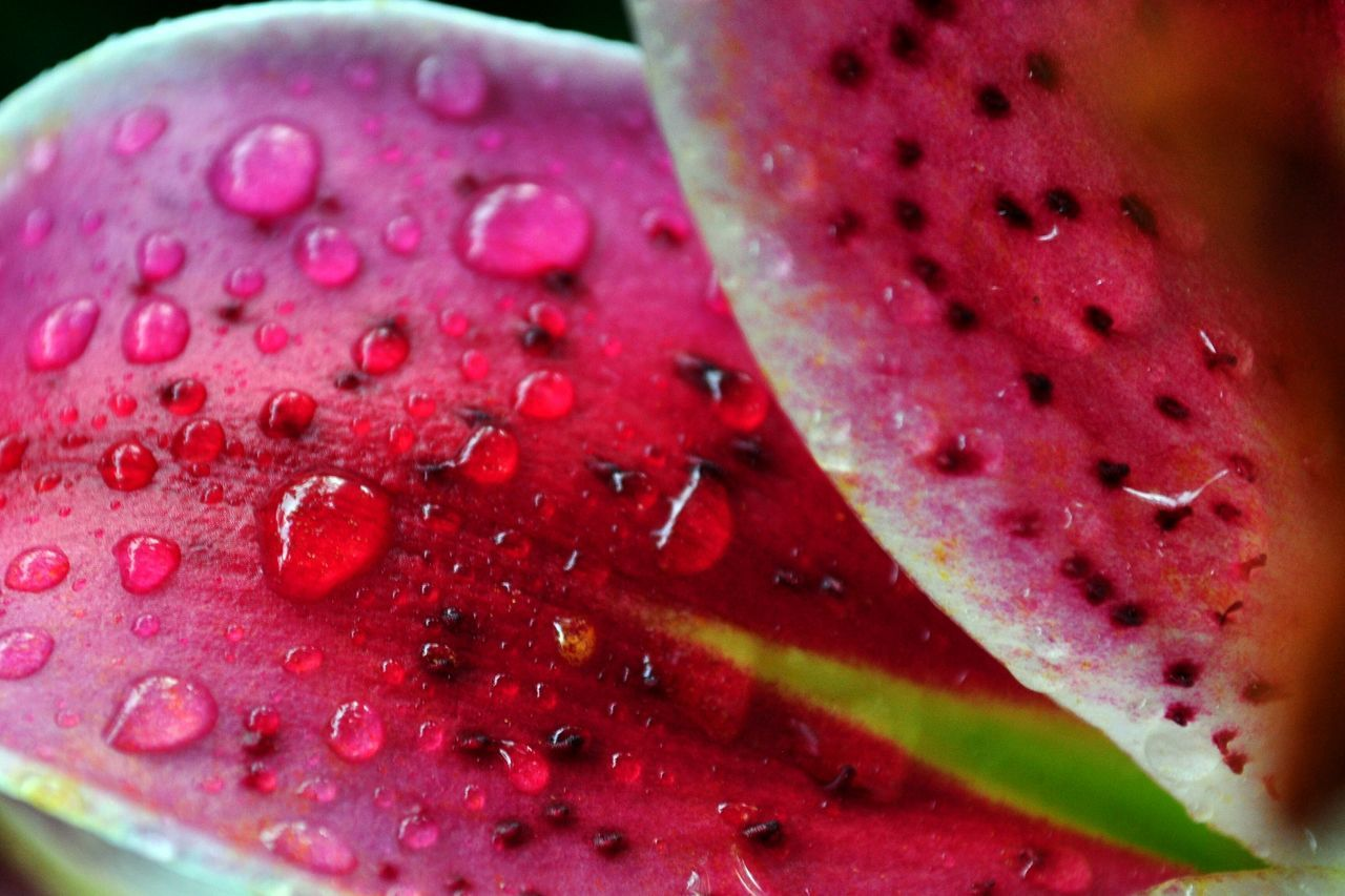 fruit, healthy eating, freshness, food and drink, close-up, red, no people, watermelon, food, pink color, indoors, pitaya, day, ready-to-eat
