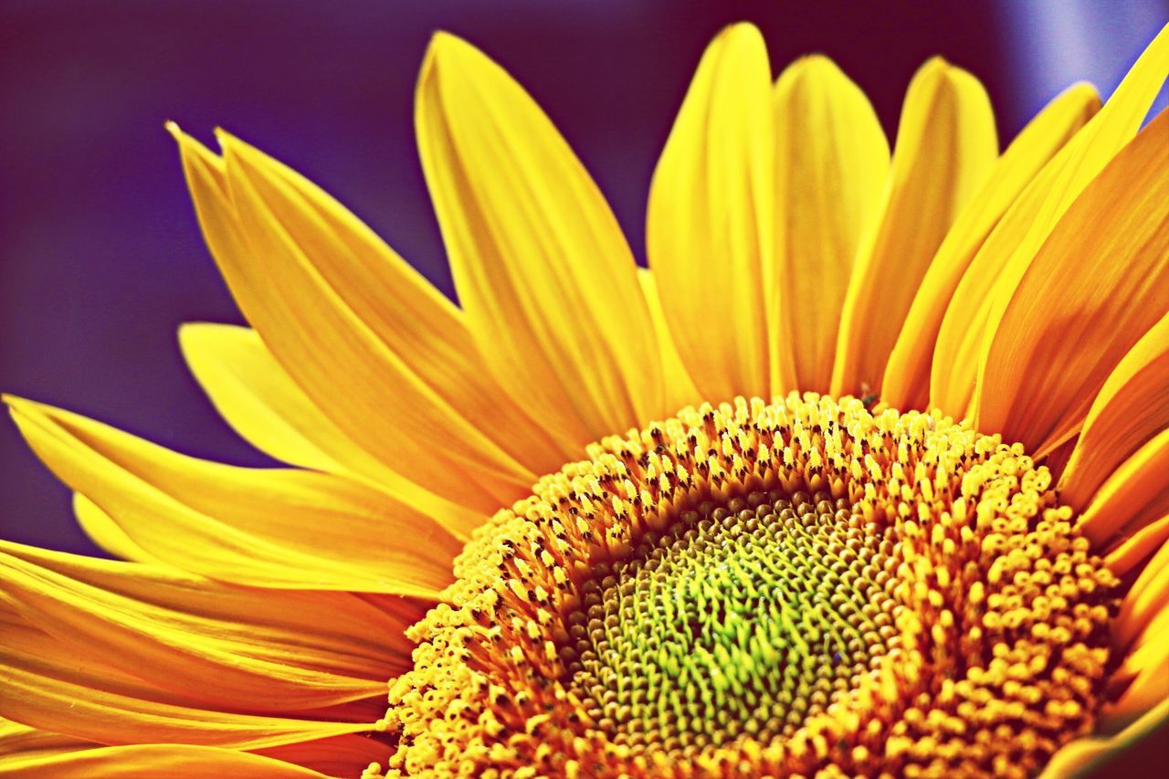 To Taiwan with love and encouragement. Sunflowermovement Sunflower