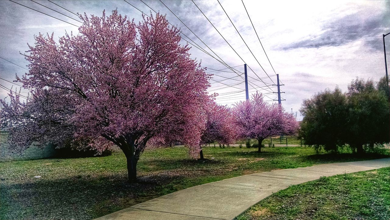 Pastel Power Intersting area. Pastel and power. Not sure that was the mission but pretty funny, anyway! Openspace Roseville Ca Roseville Roseville, CA Blooming Tree Powerlines Powerlinesaresoscenic UrbanHiking Urban Nature