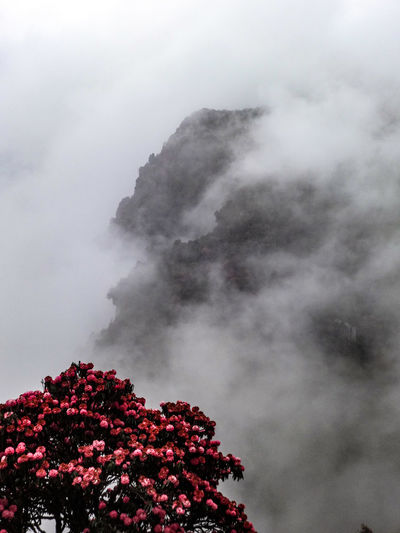 Flower Close-up Tree Nature No People Sky Indoors  Day Freshness Rhododendron Colorful Trees Foggy Landscape Foggy Mountains Landscapes Fog Nepal Travel Landscape_Collection