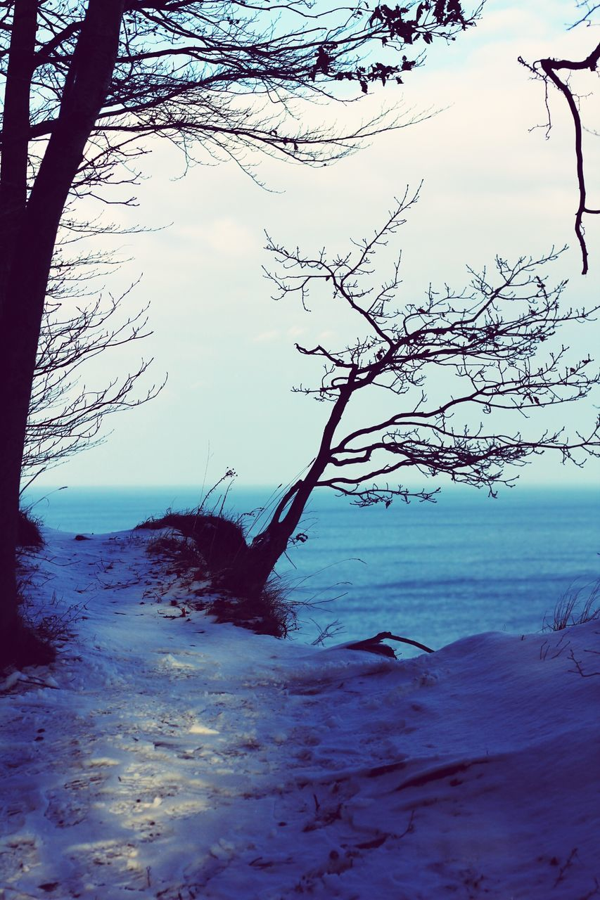 tranquility, tranquil scene, beauty in nature, scenics, nature, sea, sky, no people, tree, water, outdoors, horizon over water, landscape, day, branch, beach, bare tree