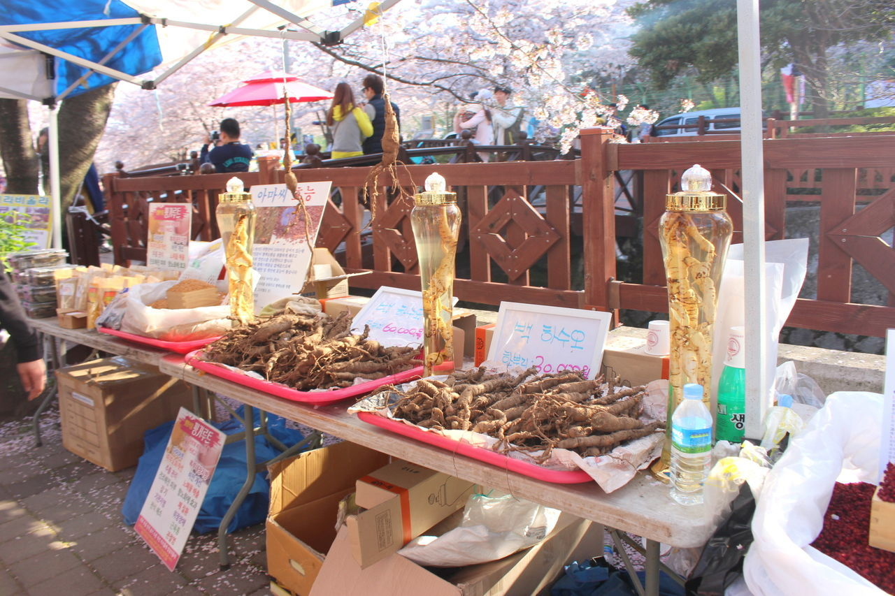 Cherry blossoms and art displays at the famous Jinhae Gunhangje Festival. April 2016 Blossoms  Bridge Changwon Cherry Blossom Day Festival Freshness Ginseng Growth Jinhae Korea Nature Outdoors People Pink Flower Rapeseed Rapeseed Flowers Sakura South Korea Spring Springtime