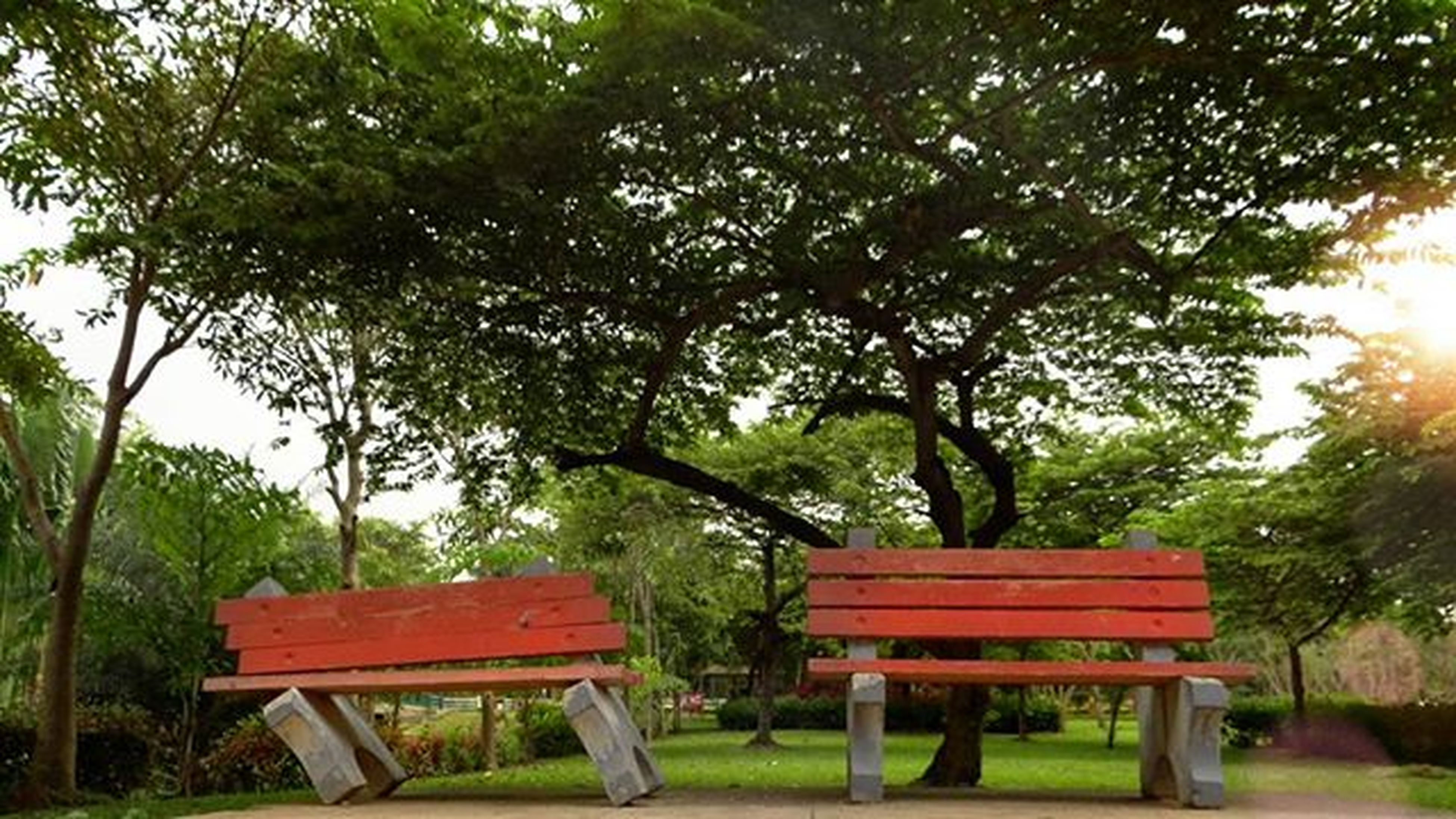 tree, bench, wood - material, growth, park bench, park - man made space, empty, green color, tranquility, wooden, absence, nature, grass, wood, chair, tranquil scene, outdoors, branch, day, sunlight