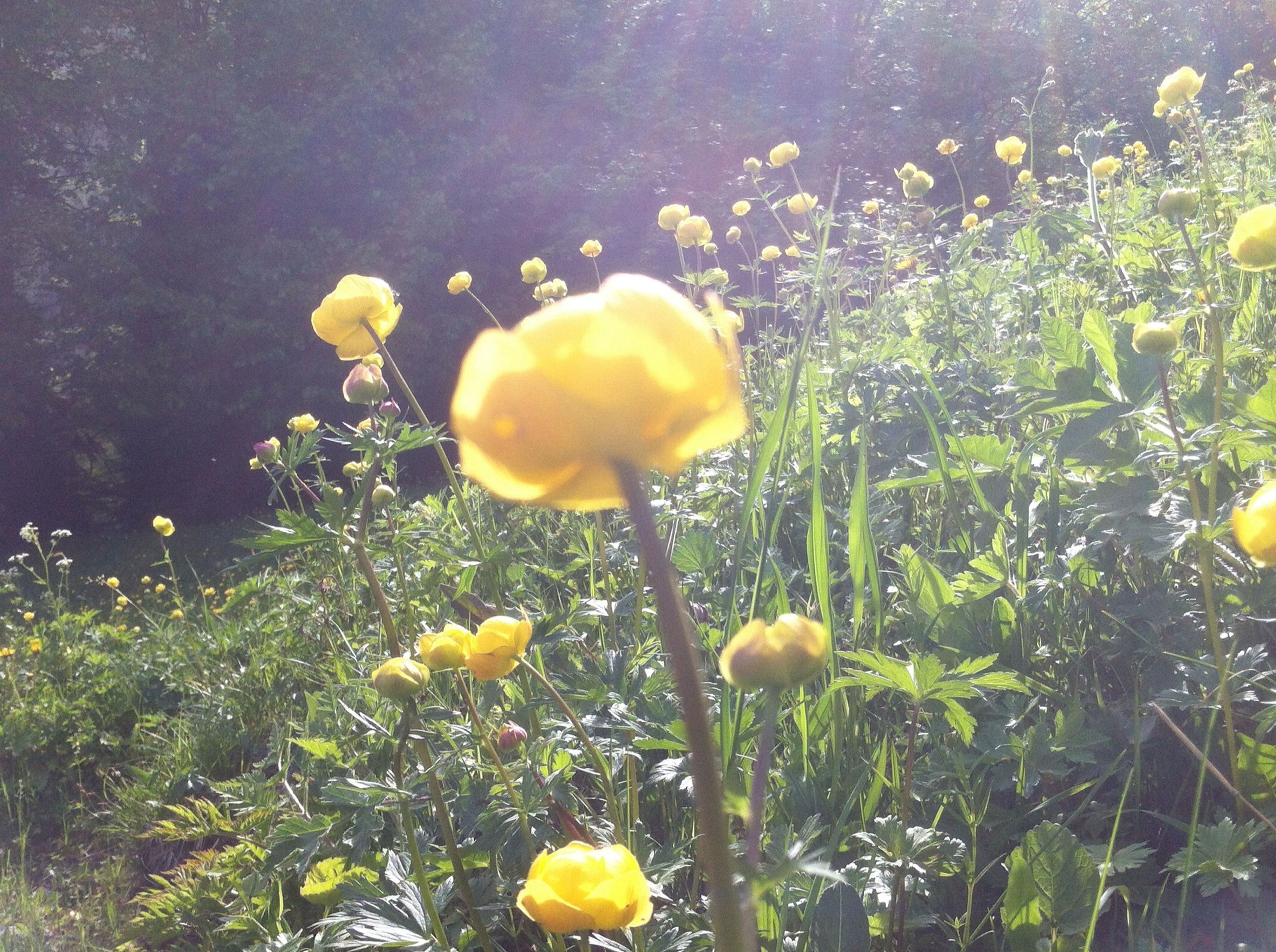 flower, growth, freshness, yellow, fragility, beauty in nature, nature, plant, petal, flower head, growing, field, blooming, close-up, mushroom, fungus, uncultivated, stem, day, no people