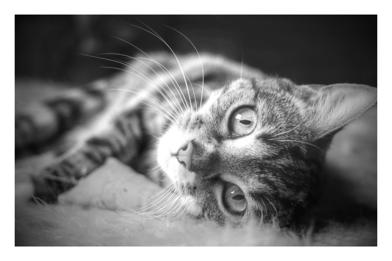 Monochrome Photography Imaginarium Photography Cat domestic cat Black And White One Animal Close-up Pets Animal Themes Animal Body Part Whisker Feline No People Domestic Animals Mammal Day Lookinfrontofyou Looking At Camera Noses Happy Pet Photography  Cat Photography Macro Photography