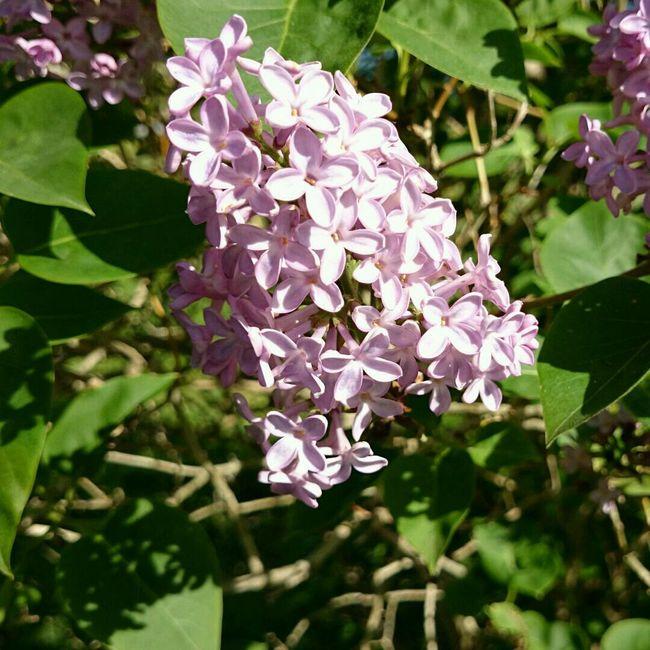 Eide På Nordmøre Summer ☀ Norway Flower Collection