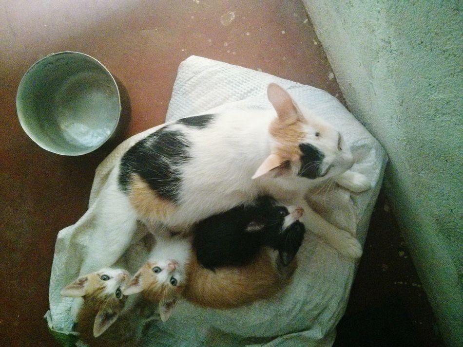 Family Professor Jamil Cat Kitten Mather And Children Black Female